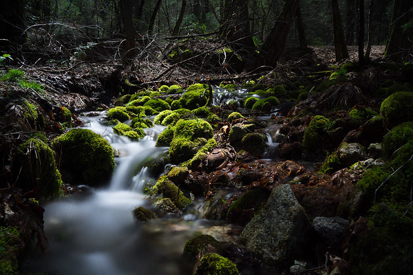 Landscape Photography | Yosemite National Park | Peaceful Stream