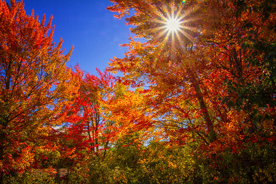 Red and yellow maples fall color blue sky sunstar near Portsmouth NH 10-11-15 - Copy