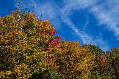 Fall trees yellow gold red near Hanover NH 10-12-15