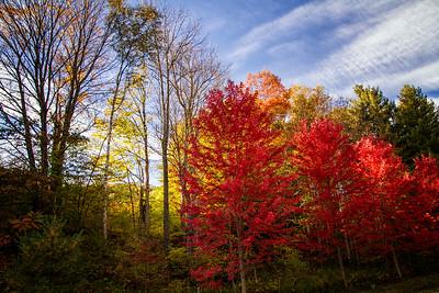 Fall scene near Strafford VT red golden trees 10-12-15