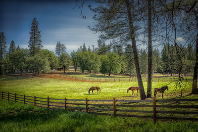 The Horses of Pacerville