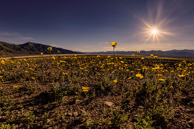 Death Valley Wildflower Bloom in Fisheye