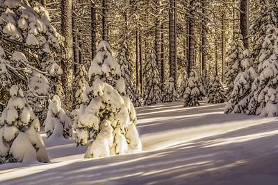 Snowy Hillside, Spooner Summit
