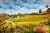 Apple Hill vineyard 4794