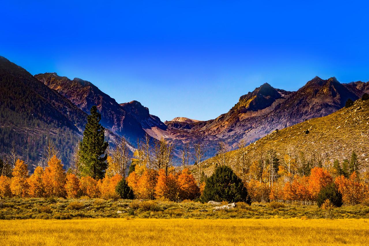 Fall in the Eastern Sierras 5410