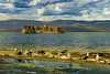 Gulls at Mono Lake