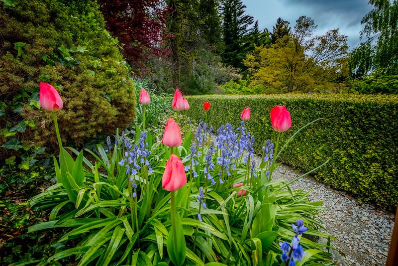 Crystal Hermitage Gardens Tulips 5875