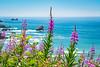 Wildflowers, Del Norte Coast Redwood National Park, CA coast