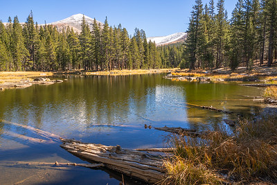 Yosemite Mirror pond 9830