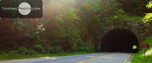 Tanbark tunnel 239