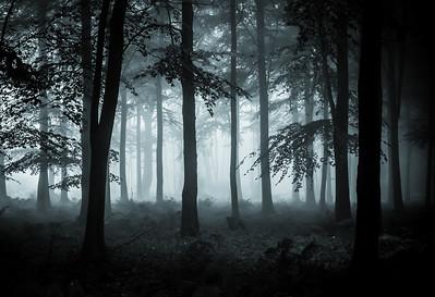 Kingswood Fog
