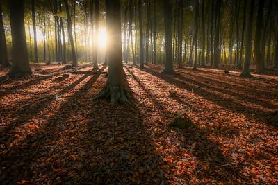 Kingswood Autumn