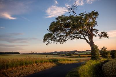 Chillenden Lone Tree