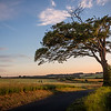 Chilenden Lone Tree