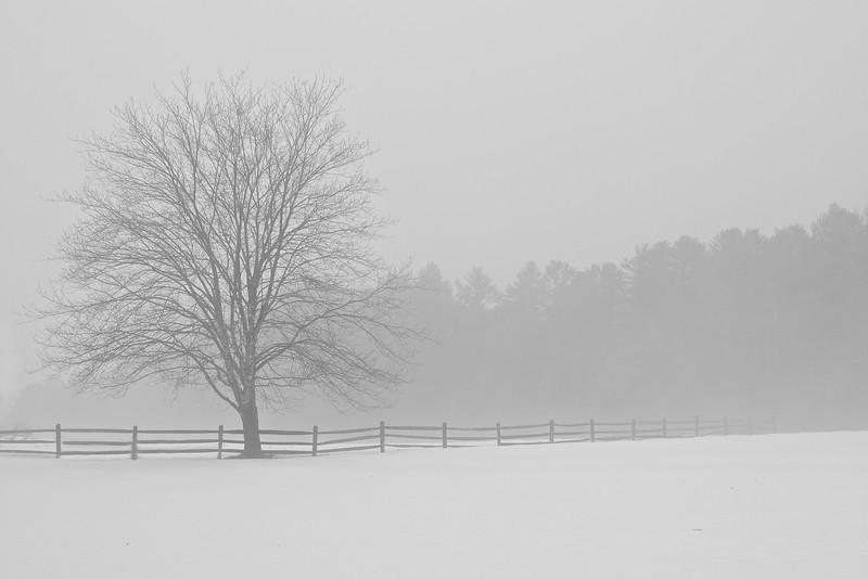 Foggy Tree