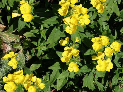 IMG_0291-06-17-05 Angelwood Gardens
