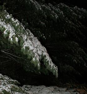 AngelwoodChristmas-12-09-05-6857