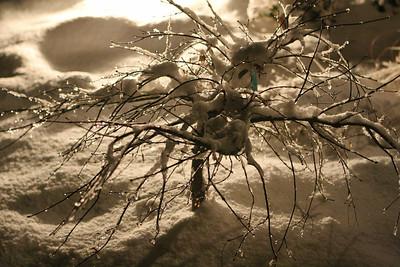 AngelwoodChristmas-12-09-05-6862 v2