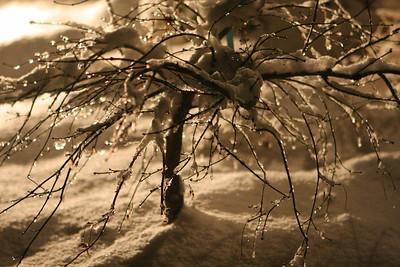 AngelwoodChristmas-12-09-05-6846