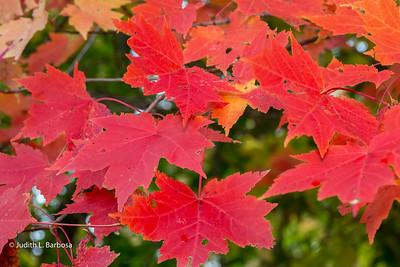 Fall-jlb-10-25-15-0468w