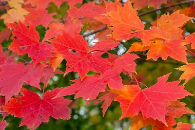Fall-jlb-10-25-15-0467