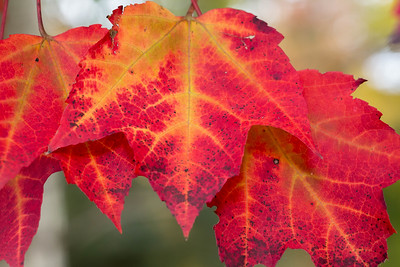 Fall-jlb-10-25-15-0497