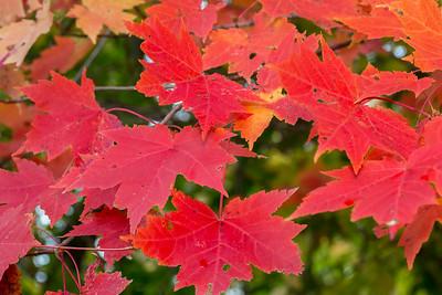 Fall-jlb-10-25-15-0468