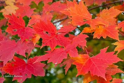Fall-jlb-10-25-15-0467w
