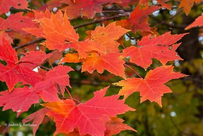 Fall-jlb-10-25-15-0470w