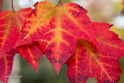 Fall-jlb-10-25-15-0497w