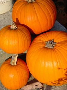 garden-1183 pumpkins