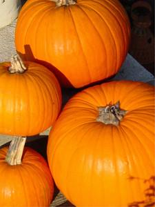 garden-1184 pumpkins
