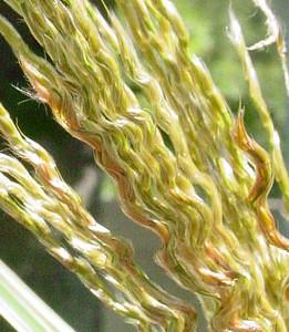 garden-1070b grasses unfolding