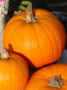 garden-1185 fall pumpkins