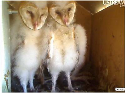 molly owl v9999 (05-03-10) v2