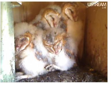 molly owl v9999 (05-10-10) v1