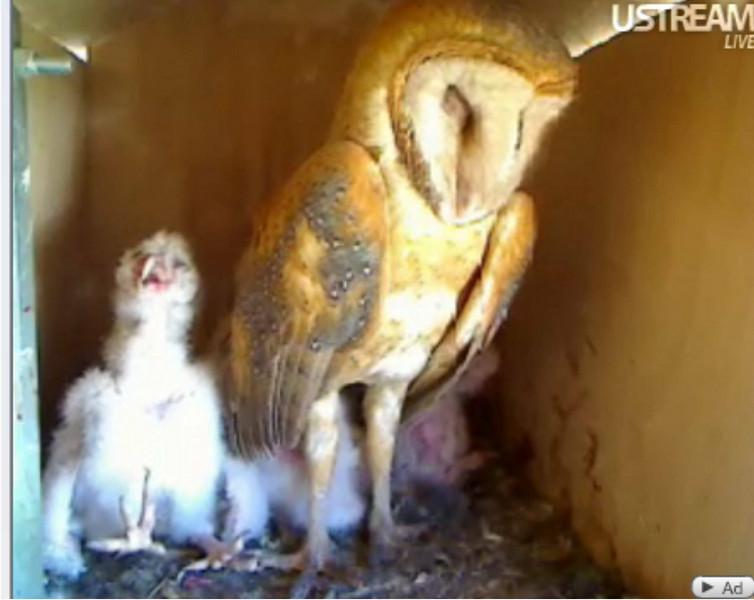Molly owl v8 (04-07-10) v10