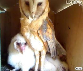 Molly owl v8 (4-17-10) v12