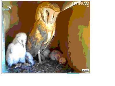 Molly owl v8 (04-07-10) v9