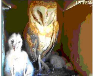 Molly owl v8 (04-07-10) v11