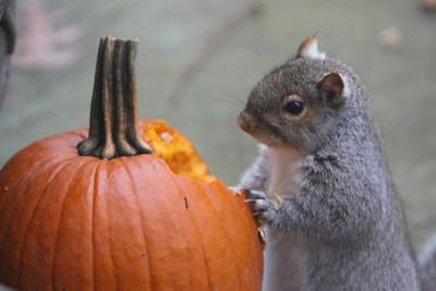 Thanksgiving-jlb-11-23-11-0828-005