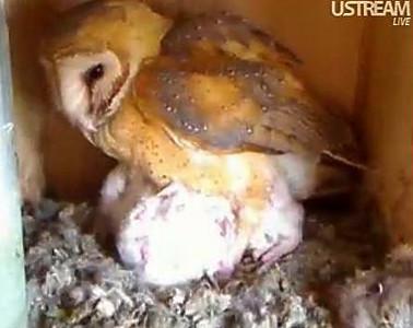 Molly owl v5 (04-05-10)