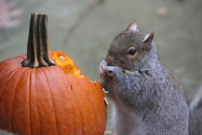Thanksgiving-jlb-11-23-11-0826-004