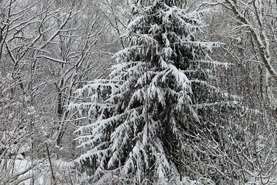 Winter 2010-2011-jlb-01-07-11-5566