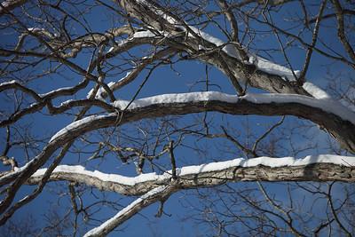 Winter 2010-2011-jlb-01-08-11-5714