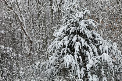 Winter 2010-2011-jlb-01-07-11-5565