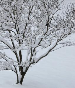 Winter 2010-2011-jlb-01-07-11-5567