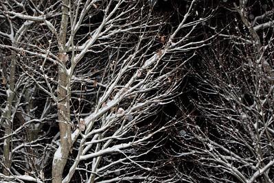 Winter 2010-2011-jlb-01-07-11-5557