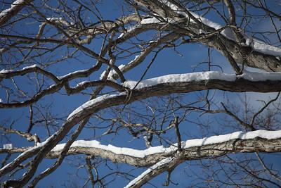 Winter 2010-2011-jlb-01-08-11-5716