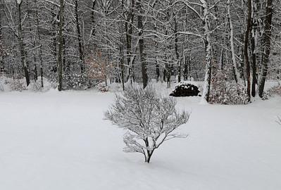Winter 2010-2011-jlb-01-07-11-5559
